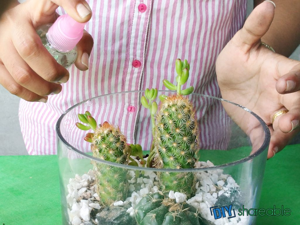 use a spray bottle to water your terrarium, but not too much