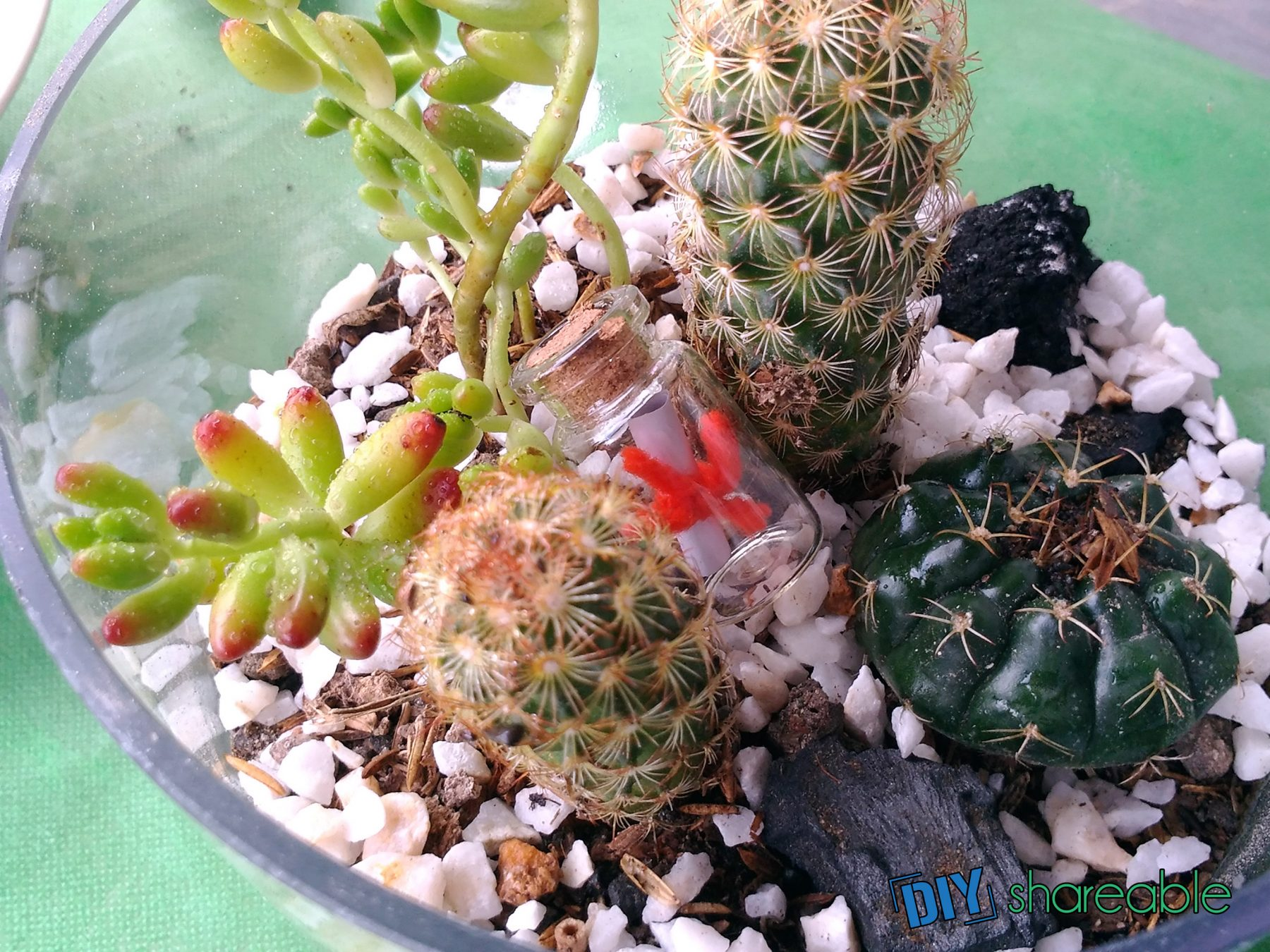 How To Make a Cool, Tiny DIY Succulent Terrarium (7 STEPS)