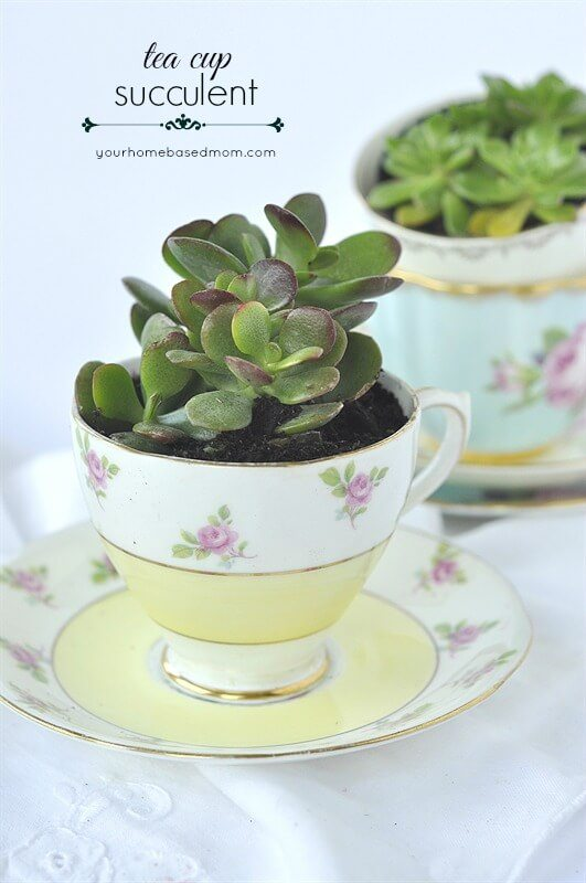 yellow pink flowers tea cup succulent plant