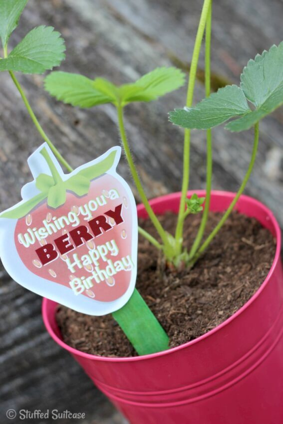 green strawberry plant red pot handmade tag