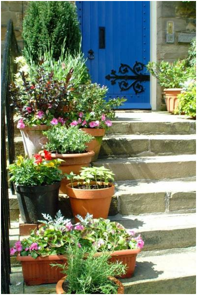 Plants in pot of 7 Creative Small Space Gardening Ideas & Designs