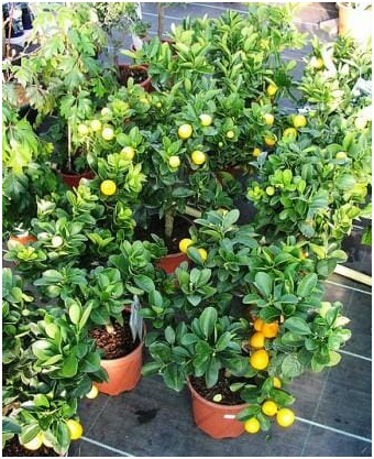 Plants in a pot of 7 Creative Small Space Gardening Ideas & Designs