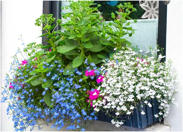 Photo of Plants of 7 Creative Small Space Gardening Ideas & Designs