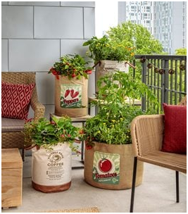 Photo of Plants in terrace of 7 Creative Small Space Gardening Ideas & Designs