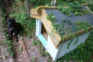 Dog house with a garden roof.