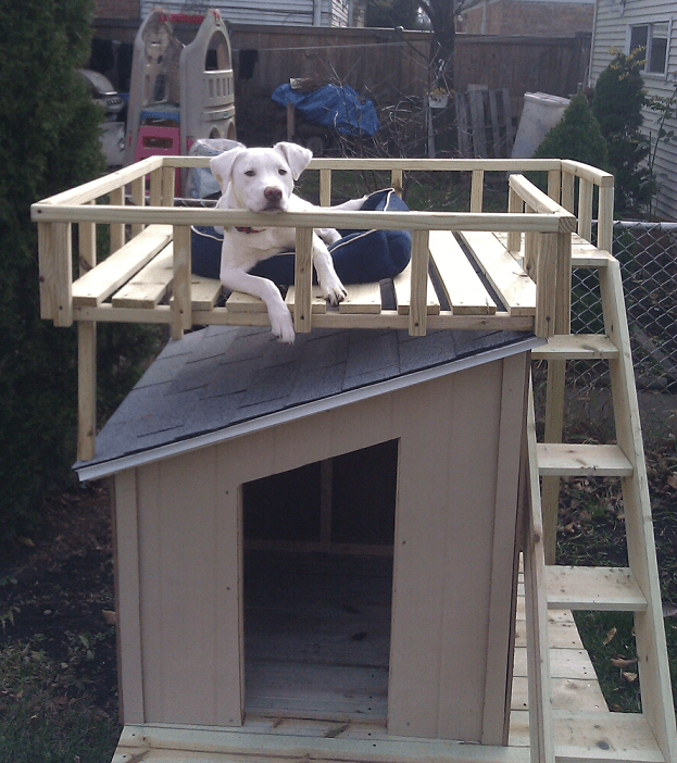 Doghouse with rooftop deck.