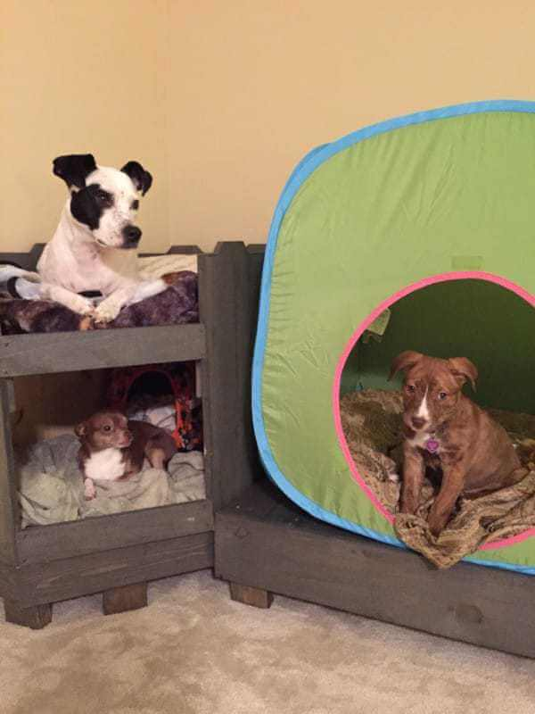 Pallet doghouse with bedding and tent.